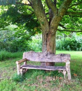 Lovers bench under the old chestnut tree, a time for reflection